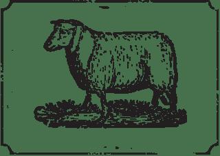 Photo of Lamb
