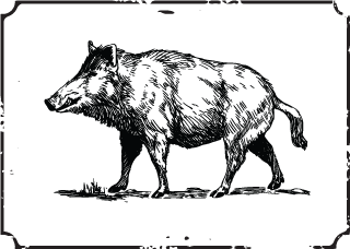 Photo of Wild Boar