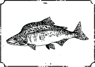 Photo of Whole Salmon