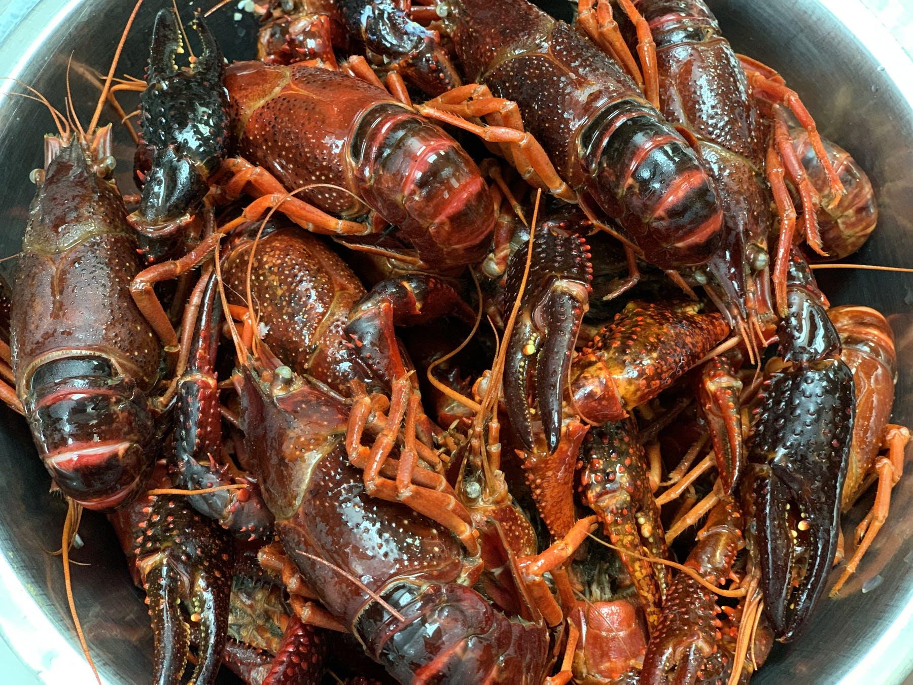 live crawfish in bowl