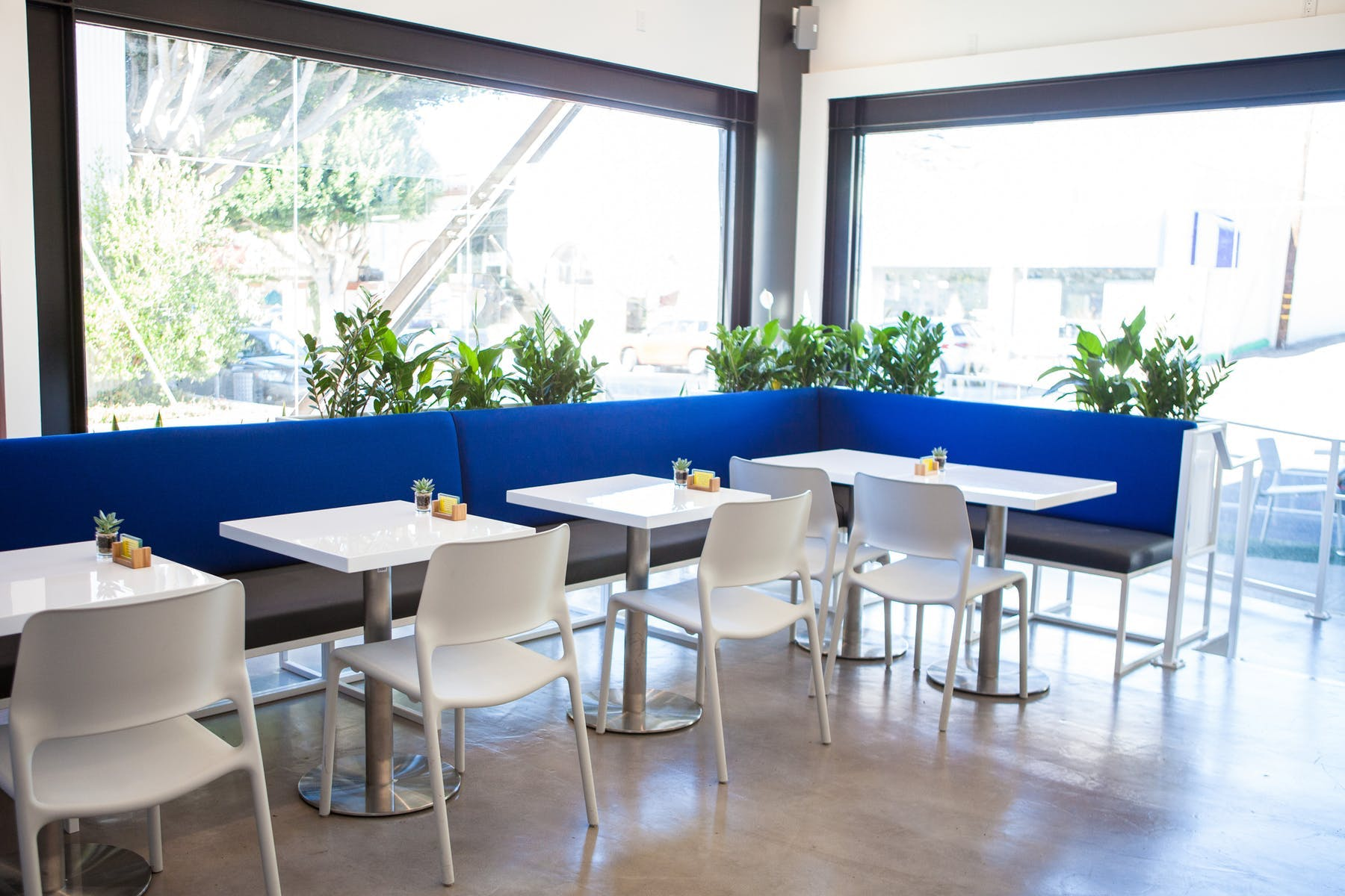 empty restaurant with white chairs and tables with a blue booth lining the edge of the windows along the walls of the restraurant with plants behind