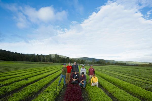 a group of people standing on a lush green field