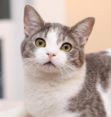 a cat that is looking at the camera