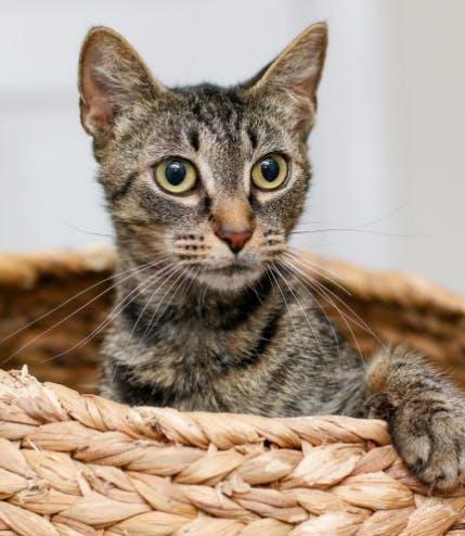 a cat sitting in a basket