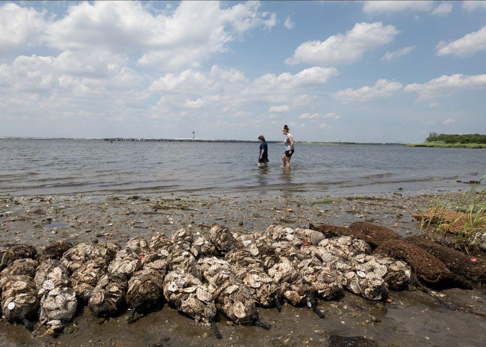 a flock of seagulls standing on a rocky beach