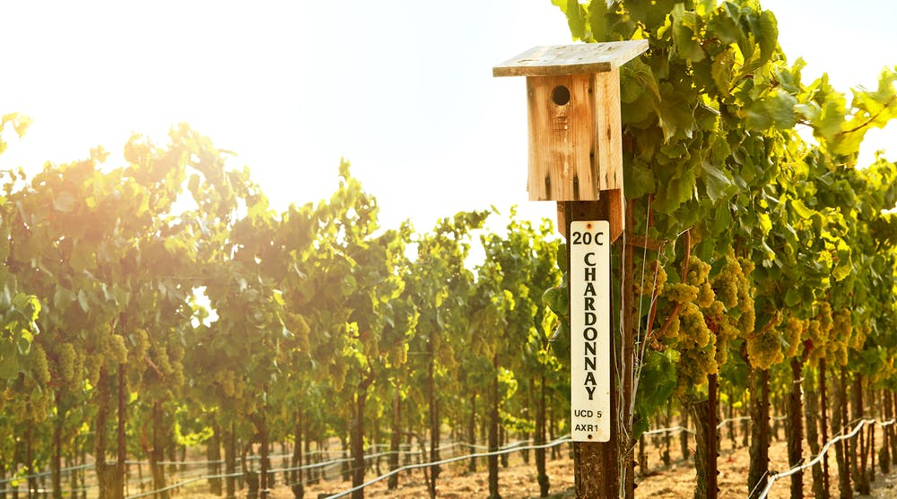 Bouchaine Vineyards birdhouse