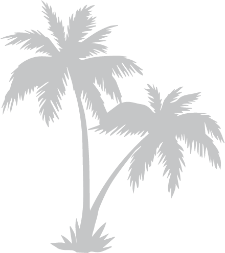 a close up of palm trees