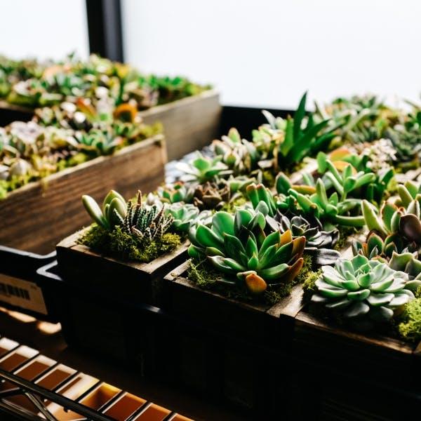 several plants