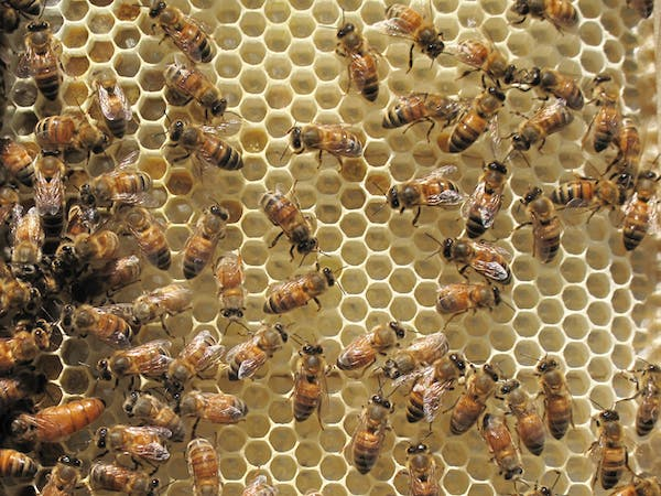 a hive filled with bees