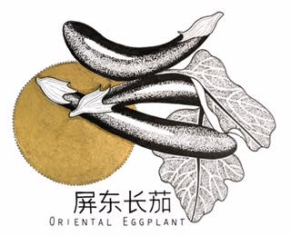 King's co - Oriental Eggplant