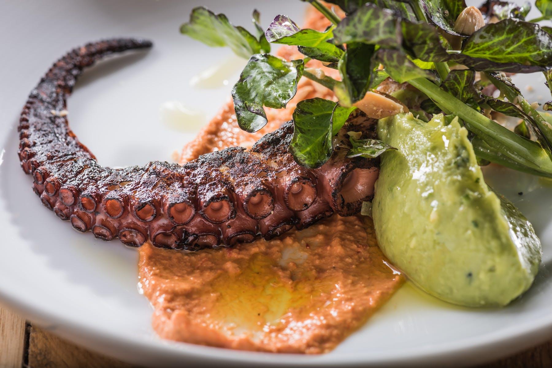 gourmet tentacle plate