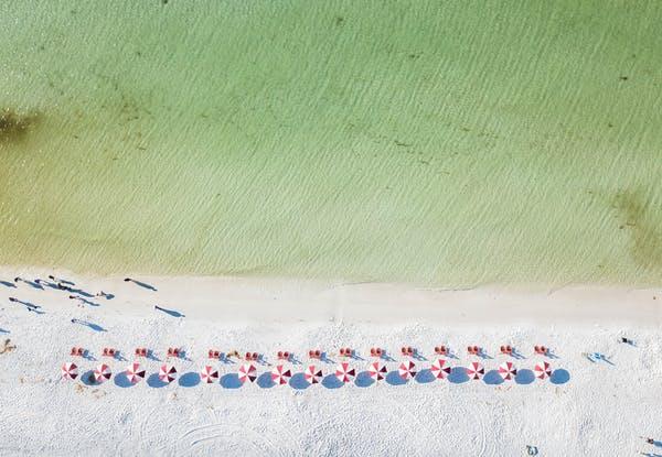 a flock of birds sitting on top of a sandy beach