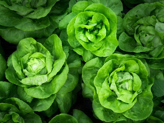 a group of lettuce
