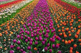 sweeten creek coffee field of flowers