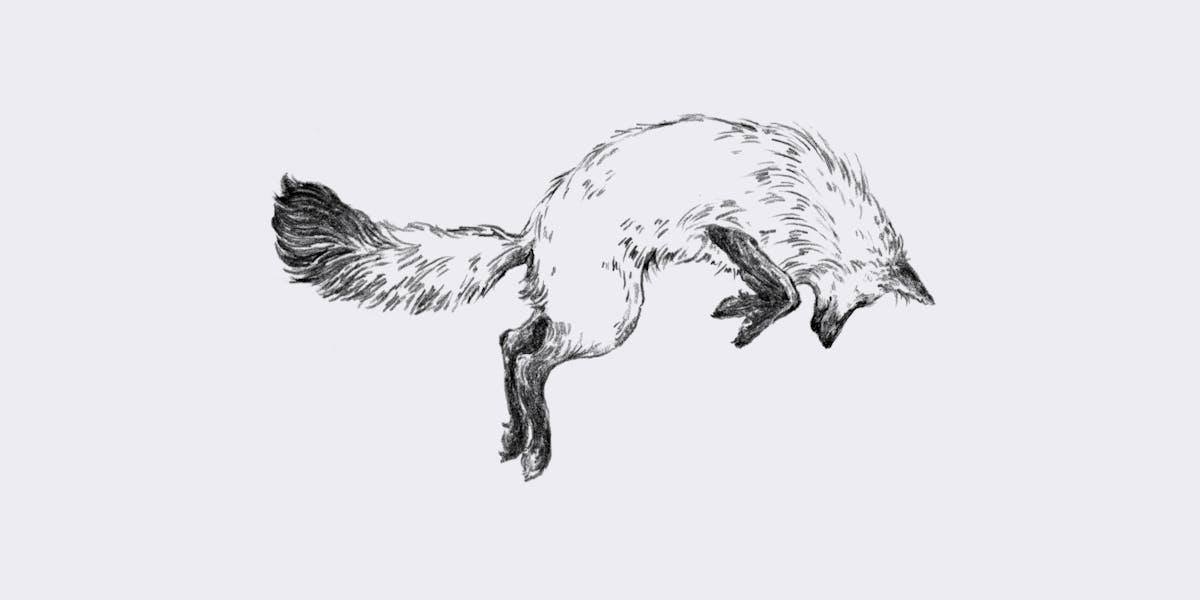 Recipes | Fox in the Snow