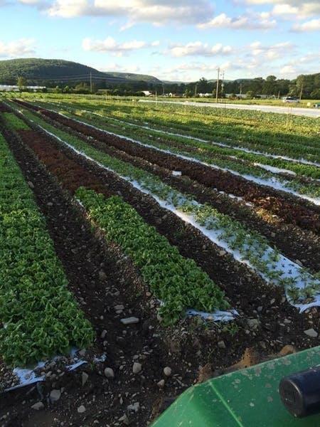 Photo of Norwich Meadows Farm