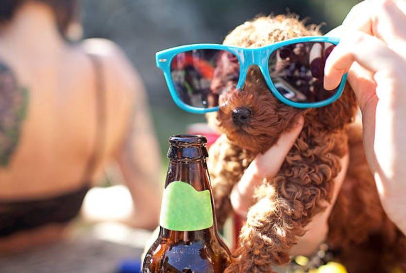 Dogs Dine Free Mondays