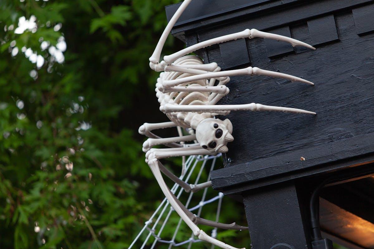 a spiderweb