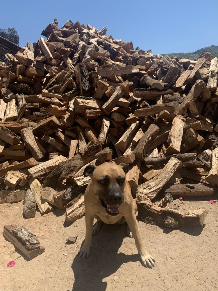 a dog sitting in front of a pile of wood