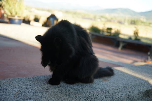 a cat sitting on the ground