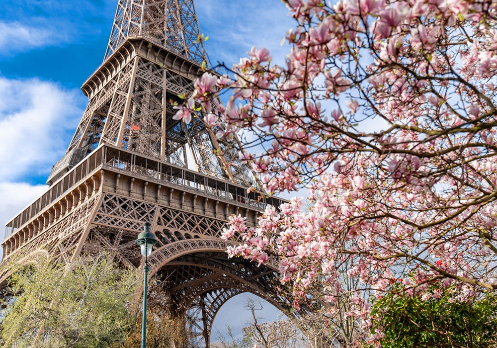 the eiffel tower during springtime