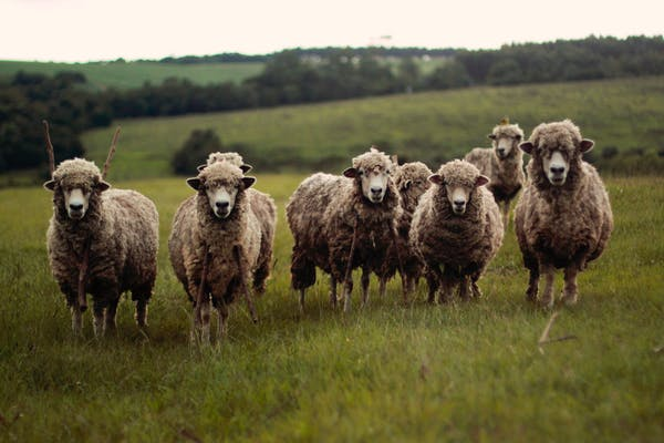 Photo of Sheepsmilk Ricotta