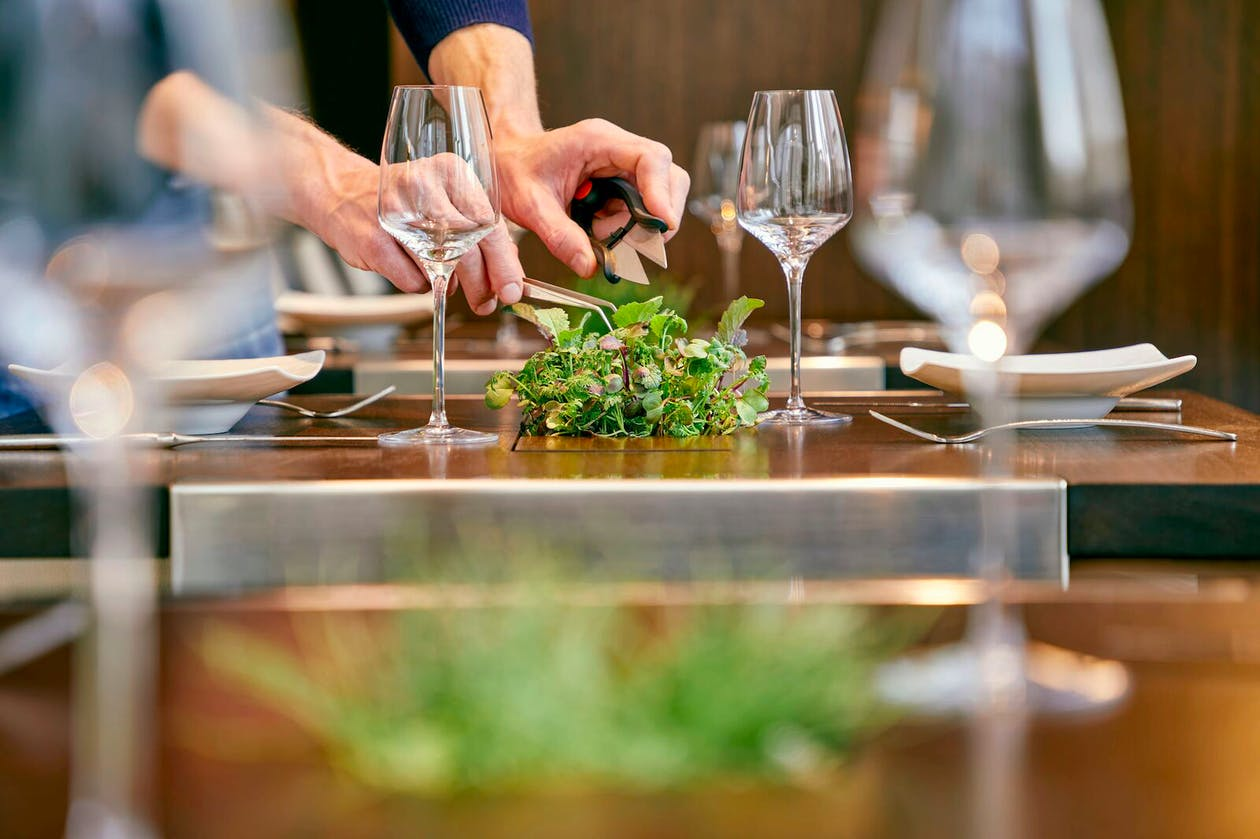 a person holding a wine scissors over plant on a table