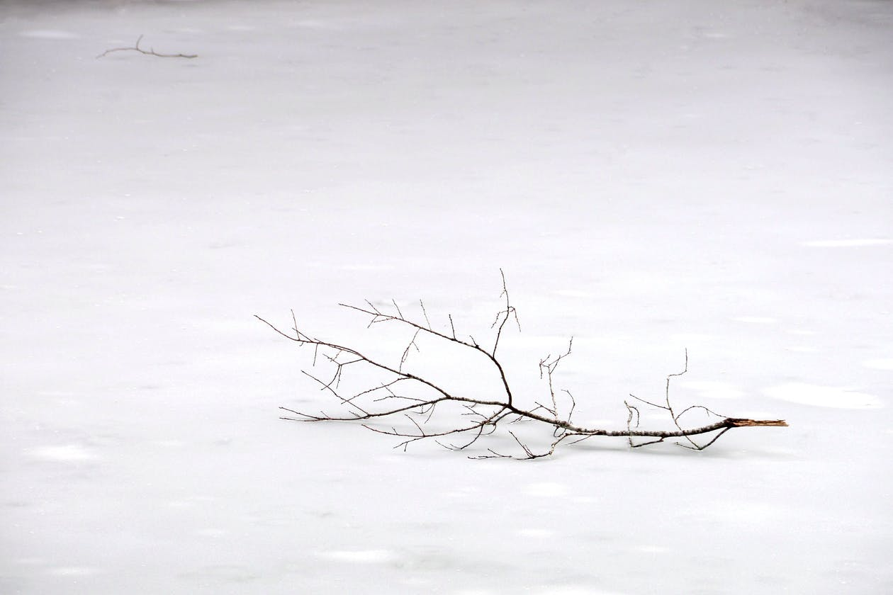 a tree branch on snow.