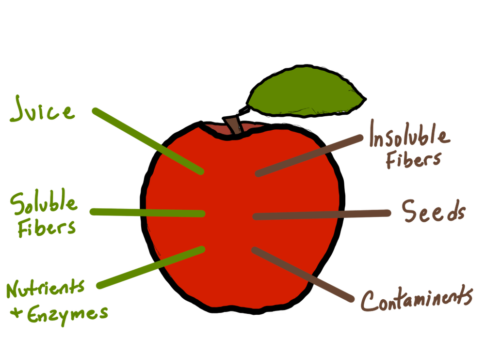 an apple drawing