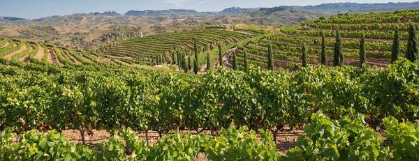 Prioriat vineyard in Spain