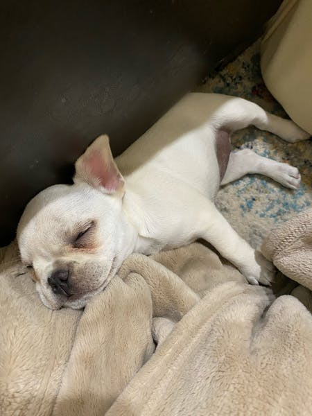 a dog sleeping on a blanket