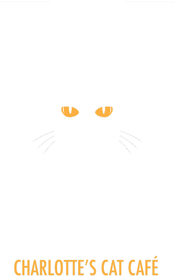 Mac Tabby Cat Cafe | Charlotte's First Cat Cafe located in