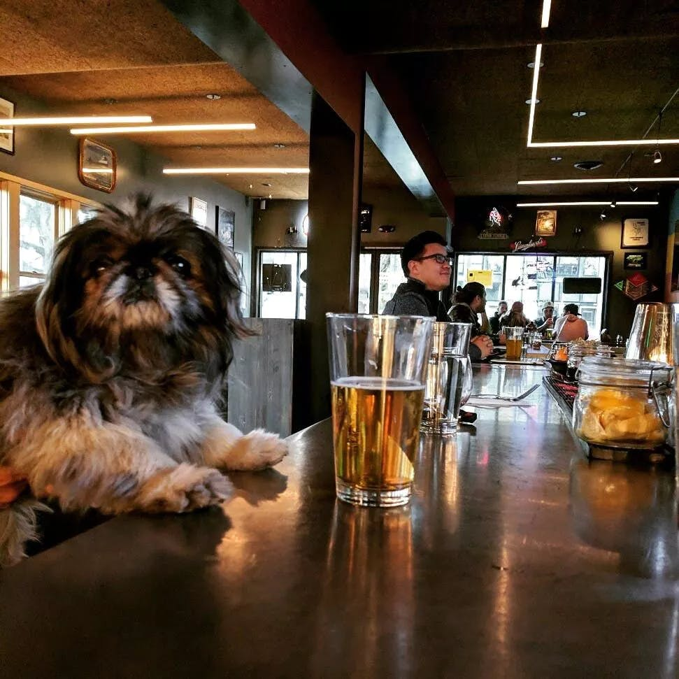 a dog sitting on the bar with a beer in front of him