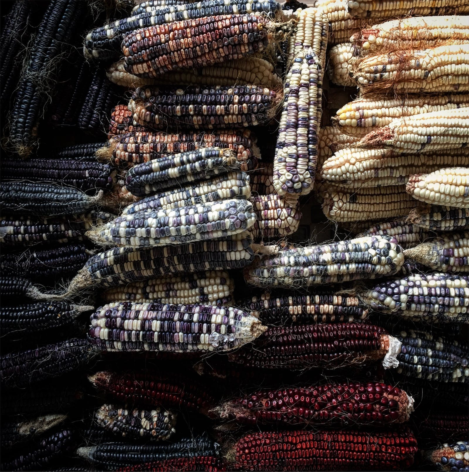 Multiple colors of harvested corn